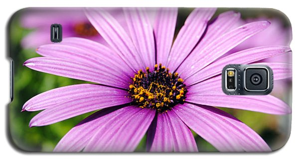 The African Daisy 1 Galaxy S5 Case