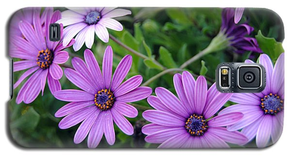 The African Daisy Flowers Galaxy S5 Case