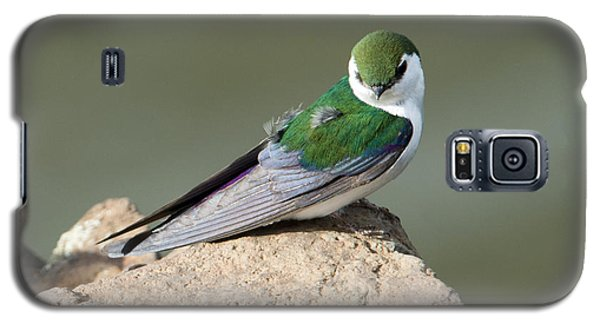 Violet-green Swallow Galaxy S5 Case