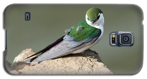 Violet-green Swallow Galaxy S5 Case by Mike Dawson
