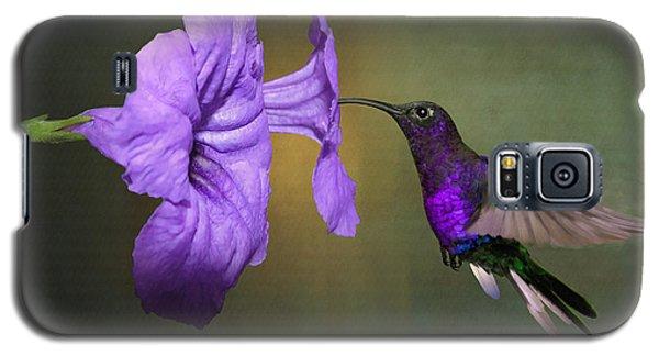 Violet Sabrewing Hummingbird Galaxy S5 Case