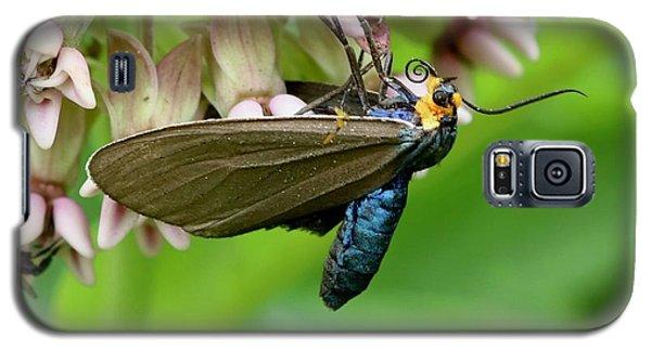 Virginia Ctenucha Moth Galaxy S5 Case