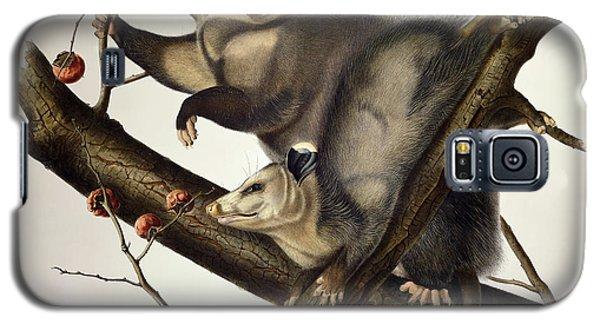Audubon Galaxy S5 Case - Virginian Opossum by John James Audubon