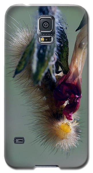 Virginia Tiger Moth 3 Galaxy S5 Case by David Lester
