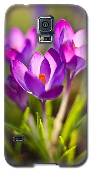 Vivid Petals Galaxy S5 Case