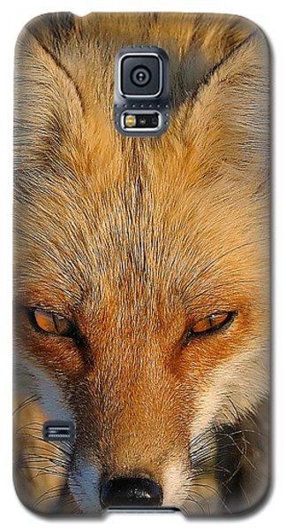 Vixen Galaxy S5 Case