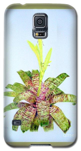 Vriesea Ospinae Var. Gruberi Galaxy S5 Case