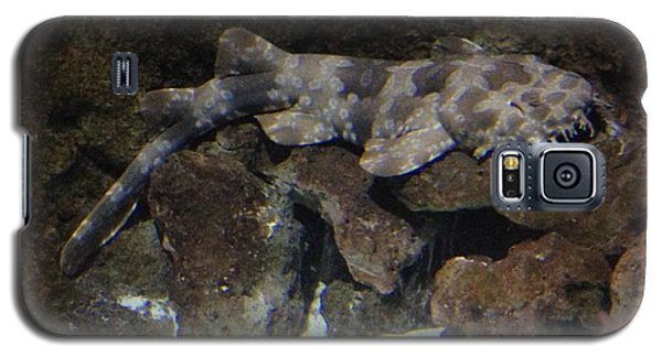 Galaxy S5 Case featuring the photograph Waiting To Eat You - Spotted Wobbegong Shark by Richard W Linford