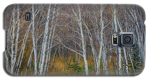 Galaxy S5 Case featuring the photograph Walk In The Woods by James BO Insogna