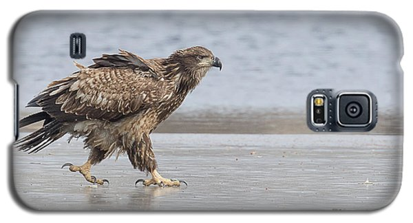 Walk Like An Eagle Galaxy S5 Case by Kelly Marquardt