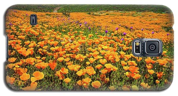 Walker Canyon Wildflowers Galaxy S5 Case by Lynn Bauer