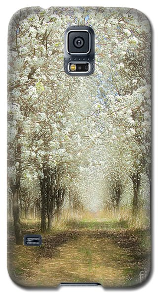 Galaxy S5 Case featuring the photograph Walking Through A Dream I by Dan Carmichael