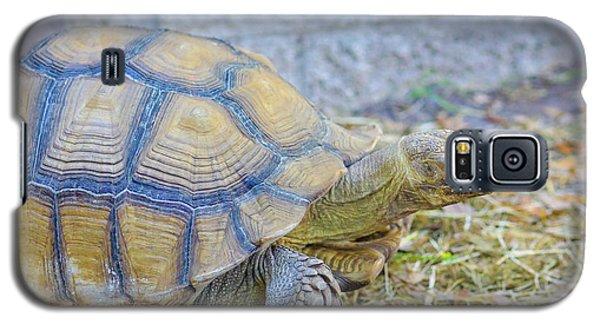 Walking Turtle Galaxy S5 Case