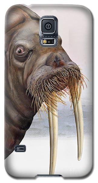 Walrus Odobenus Rosmarus - Marine Mammal - Walross Galaxy S5 Case by Urft Valley Art