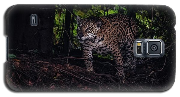 Galaxy S5 Case featuring the photograph Wandering Jaguar by Wade Aiken