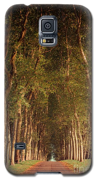 Warm French Tree Lined Country Lane Galaxy S5 Case