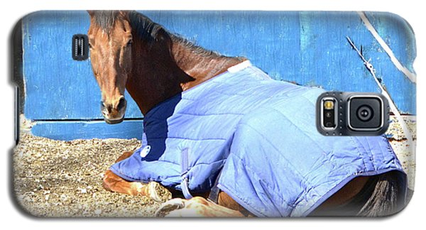 Warm Winter Day At The Horse Barn Galaxy S5 Case