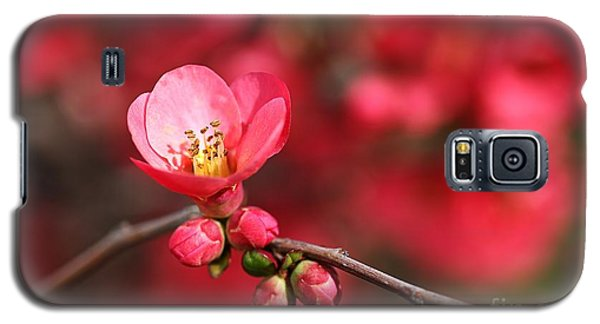 Warmth Of Flowering Quince Galaxy S5 Case
