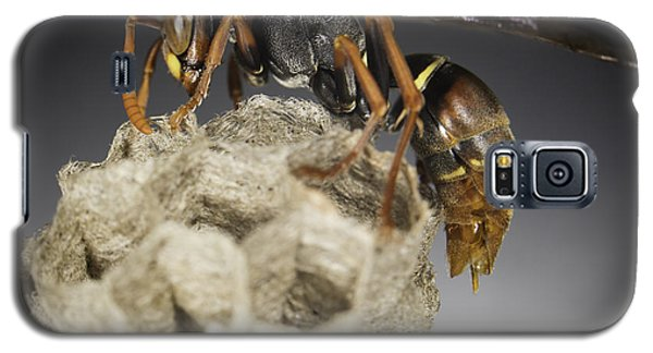Wasp On A Nest Galaxy S5 Case