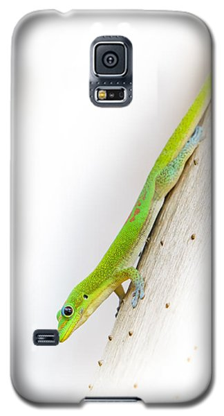 Watch Out Ants...here I Come Galaxy S5 Case