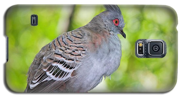Watchful Eye Galaxy S5 Case by Judy Kay