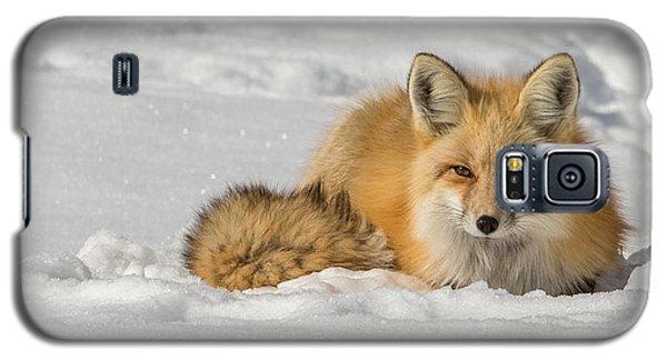 Watchful Eyes  Galaxy S5 Case