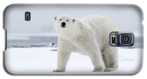 Watchful In The Arctic Galaxy S5 Case