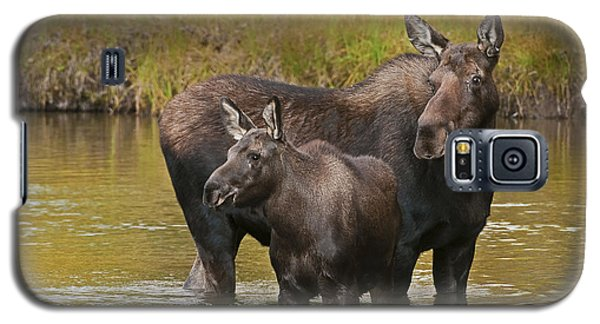 Watchful Moose Galaxy S5 Case by Gary Lengyel