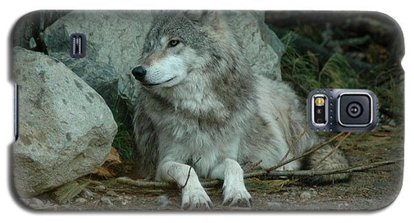 Watchful Wolf Galaxy S5 Case by Sandra Updyke