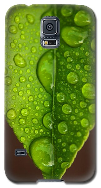 Water Droplets On Lemon Leaf Galaxy S5 Case by Ralph A  Ledergerber-Photography