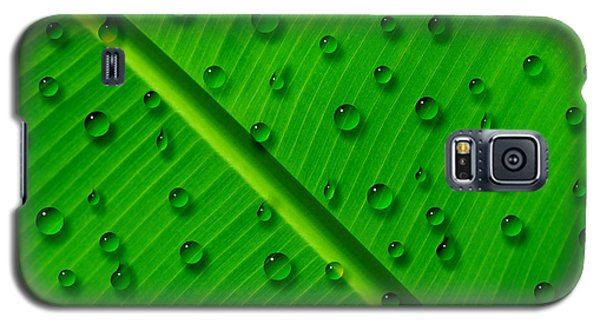 Galaxy S5 Case featuring the painting Water Drops On Palm Leaf by Georgeta Blanaru