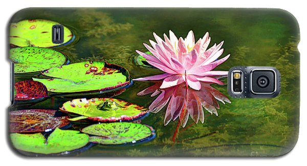 Water Lily And Frog Galaxy S5 Case by Savannah Gibbs