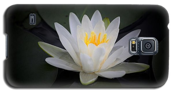 Water Lily Galaxy S5 Case by Marjorie Imbeau