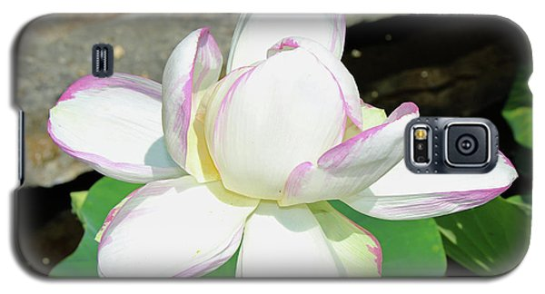 Water Lotus Galaxy S5 Case
