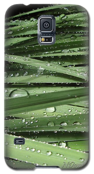 Water On Siberian Iris Galaxy S5 Case