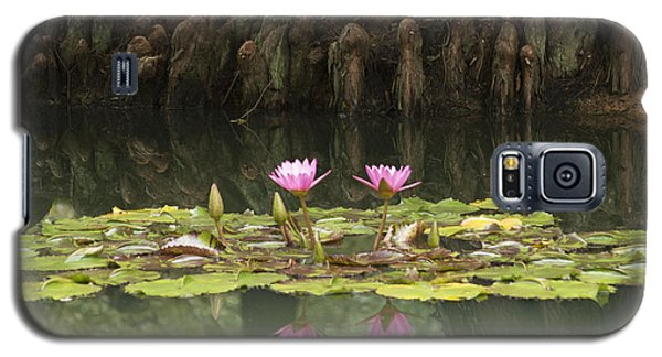 Waterlilies And Cyprus Knees Galaxy S5 Case