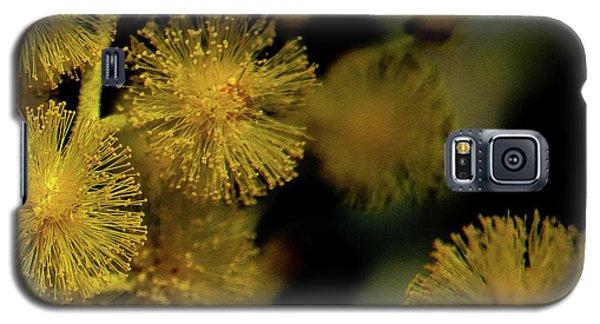 Wattle Flowers Galaxy S5 Case