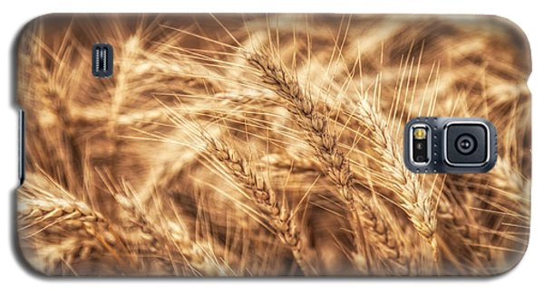 Waves Of Wheat Galaxy S5 Case