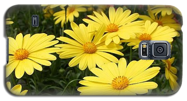 Waves Of Yellow Daisies Galaxy S5 Case