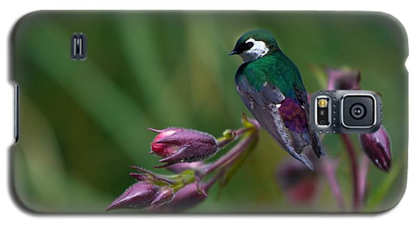Wavey Perch Galaxy S5 Case