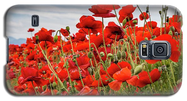 Waving Red Poppies Galaxy S5 Case by Jean Noren
