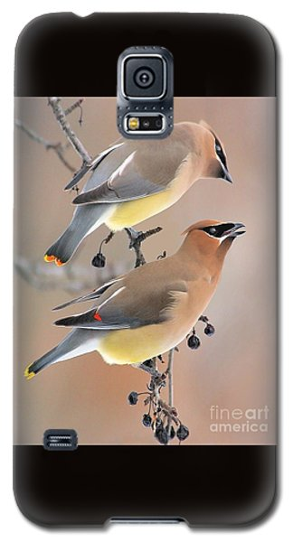 Waxwings Galaxy S5 Case by Debbie Stahre
