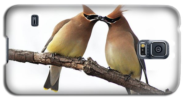 Waxwings In Love Galaxy S5 Case by Mircea Costina Photography