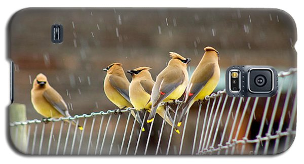 Waxwings In The Rain Galaxy S5 Case by Sean Griffin