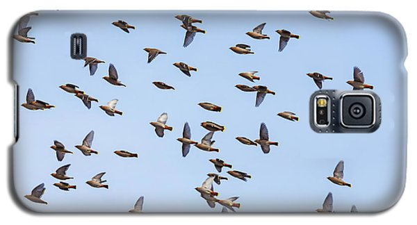 Galaxy S5 Case featuring the photograph Waxwings by Mircea Costina Photography