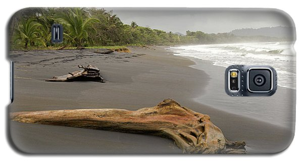 Weathered Tree On Costa Rica Beach Galaxy S5 Case
