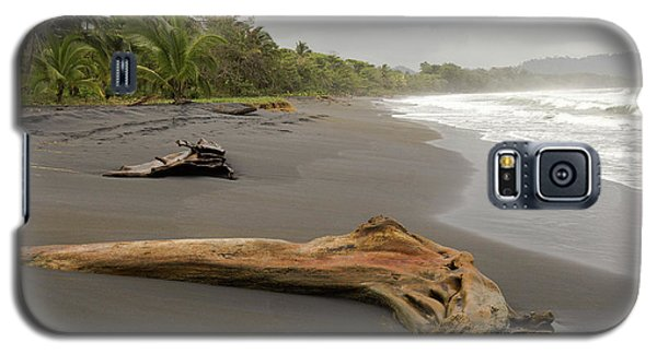 Weathered Tree On Costa Rica Beach Galaxy S5 Case
