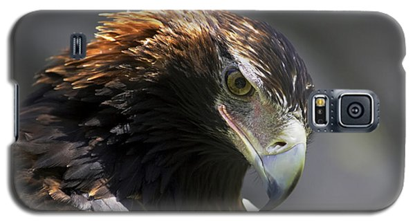 Galaxy S5 Case featuring the photograph Wedge Tail Eagle by Bill  Robinson