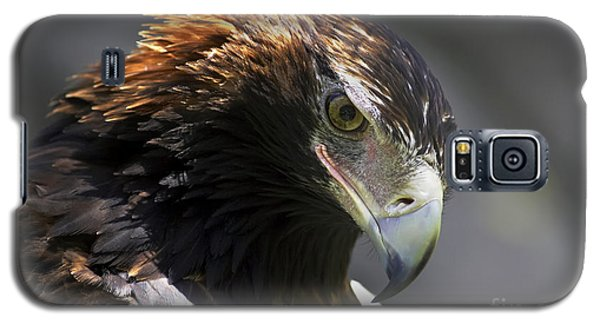 Wedge Tail Eagle Galaxy S5 Case by Bill  Robinson