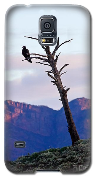 Galaxy S5 Case featuring the photograph Wedge Tail Eagles by Bill  Robinson